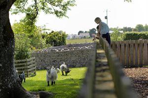 Hollins Farm